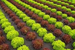J Ledo Salades en diagonales