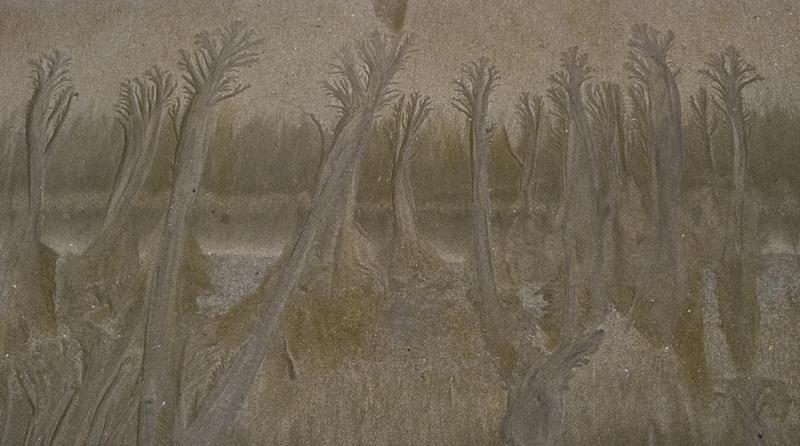 j-ledo-sur-le-sable