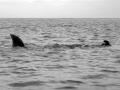 a-prevost-baignade-dangereuse