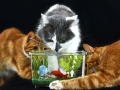 d-patard-poisson-chats