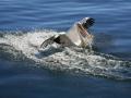 815ieme-d-poupel-pelican-a-lamerissage-27pts