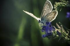 174ième S. Perrette Papillon 36pts