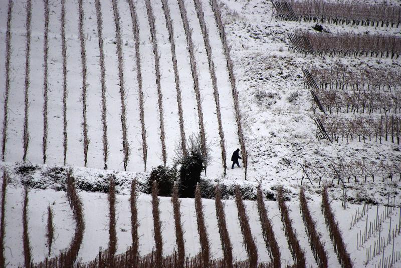 A Hébert Préparation des vignes