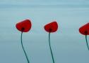g-joly-flower-by-kenzo