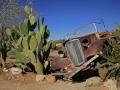 morris-et-les-cactus