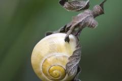 www.regardsetimages.fr-639ieme-edouard-helene-hibernatus-50pts
