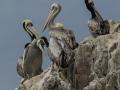 hotz-pelicans-ballestra-48-pts