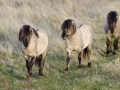 ledo-chevaux-sauvages-29-pts