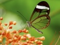 27pts-e-bailleul-festin-du-papillon