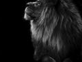 33pts-e-bailleul-profil-de-lion