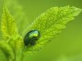 37pts-ph-bernet-scarabe