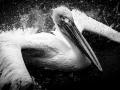 43pts-e-bailleul-baignade-du-pelican