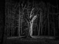 11e-s-perrette-arbre-49pts