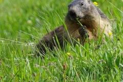 22ième A Hébert Repas de la marmotte 46Pts