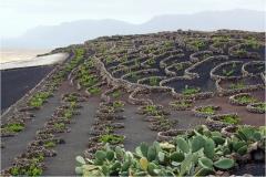 www.regardsetimages.fr-192ieme-a-hebert-vignes-volcaniques-39pts