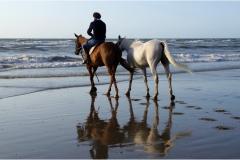 www.regardsetimages.fr-114ieme-a-hebert-promenade-au-bord-de-la-mer-38pts