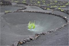 www.regardsetimages.fr-177ieme-a-hebert-pied-de-vigne-volcanique-34pts