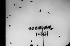 PATARD Damien  Les oiseaux